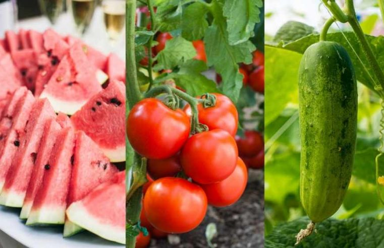 Water-Rich foods that help you Prevent Dehydration